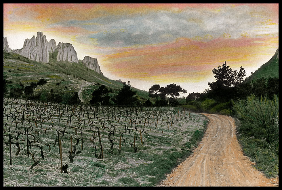 Image of vineyard in Gigondas in France with a mountain range in background